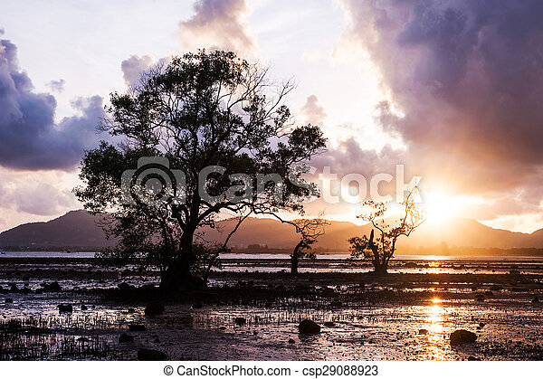Tree in the sea with color of sunset and storm cloud - csp29088923