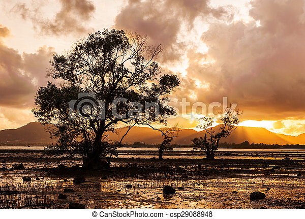 Tree in the sea with color of sunset and storm cloud - csp29088948