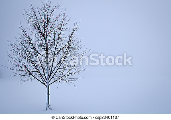 Tree in the winter - csp28401187