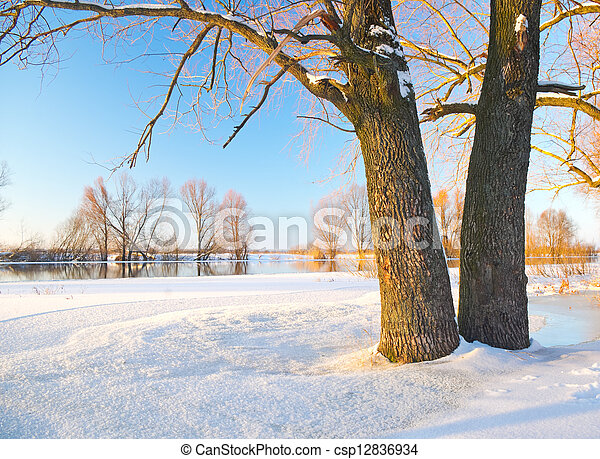 tree in the winter - csp12836934