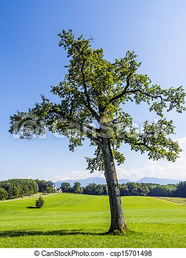 Tree in typical Bavarian landscape - csp15701498