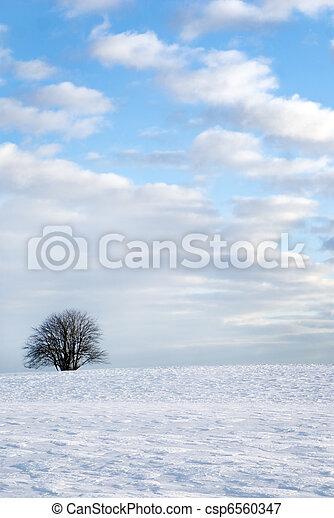 tree in winter landscape - csp6560347