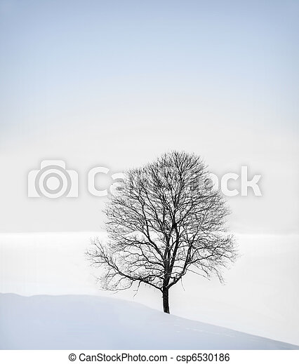 Tree in winter - csp6530186