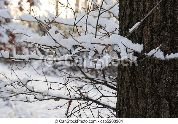 Tree in winter time, snow covered twigs - csp5200304