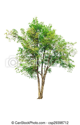 Tree isolated on white background - csp29398712