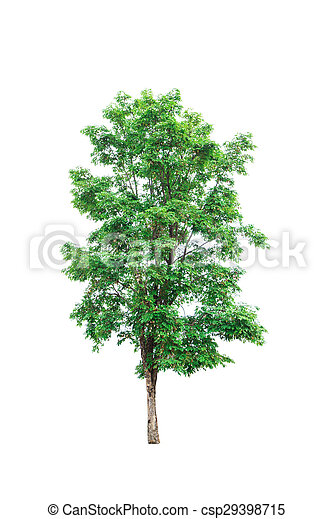 Tree isolated on white background - csp29398715