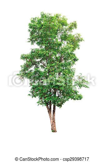 Tree isolated on white background - csp29398717