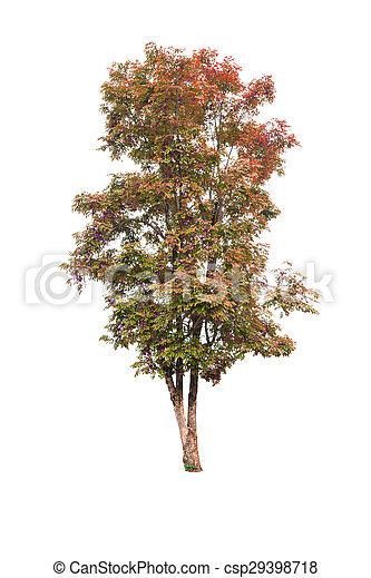 Tree isolated on white background - csp29398718