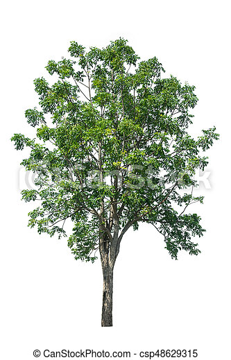 tree isolated on white background - csp48629315