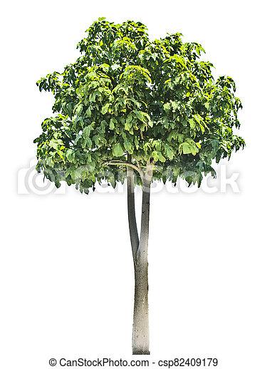 Tree isolated on white background - csp82409179