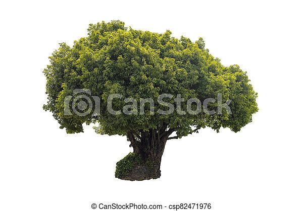 Tree isolated on white background. - csp82471976