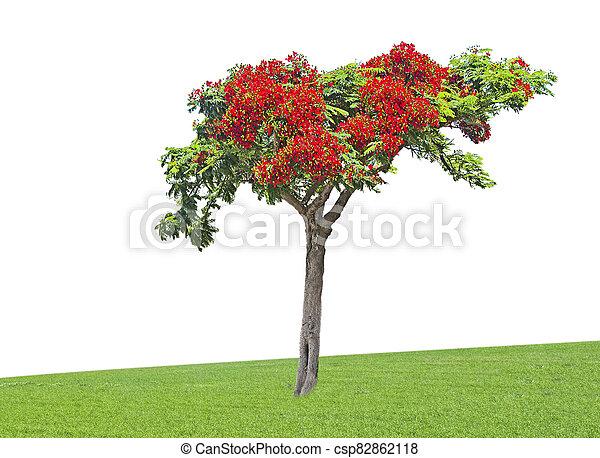 Tree isolated on white background - csp82862118