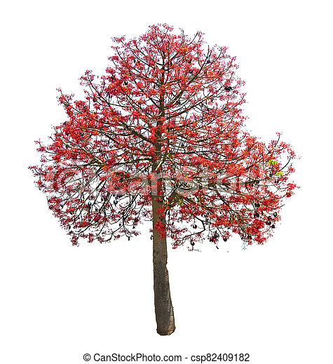 Tree isolated on white background - csp82409182