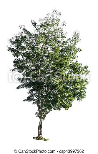 Tree isolated on white background - csp43997362
