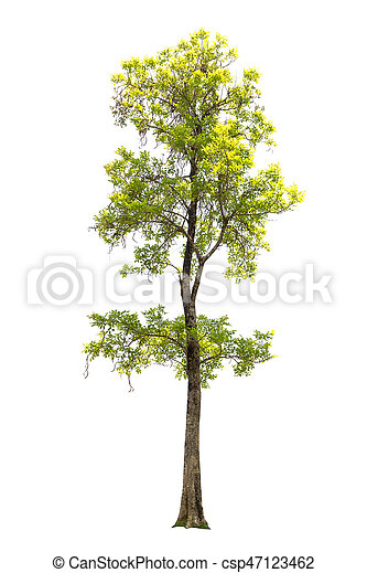 Tree isolated on white background - csp47123462
