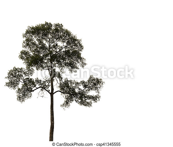 tree isolated on white background - csp41345555