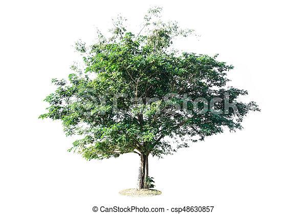 tree isolated on white background - csp48630857