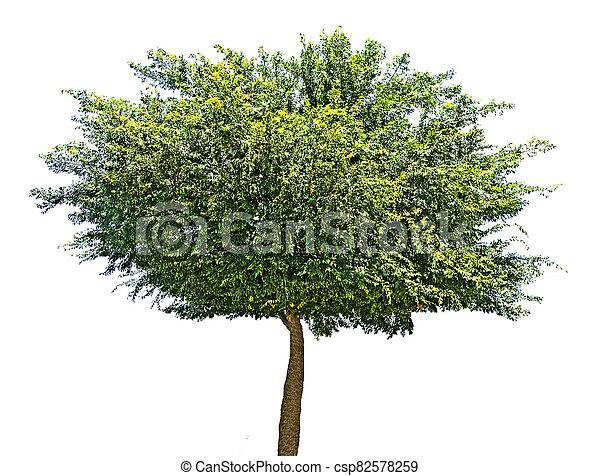 Tree isolated on white background - csp82578259