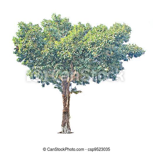 Tree isolated on white background - csp9523035