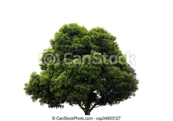 tree isolated on white background - csp34903127