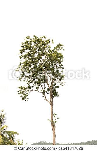 tree isolated on white background - csp41347026