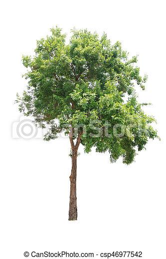 Tree isolated on white background - csp46977542