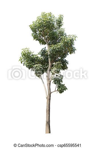 tree isolated on white background - csp65595541