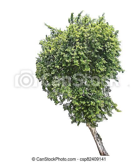 Tree isolated on white background - csp82409141
