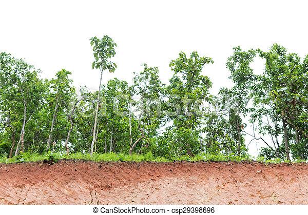 Tree isolated on white background - csp29398696