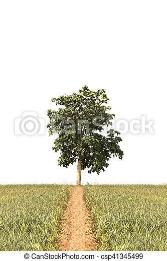 tree isolated on white background - csp41345499