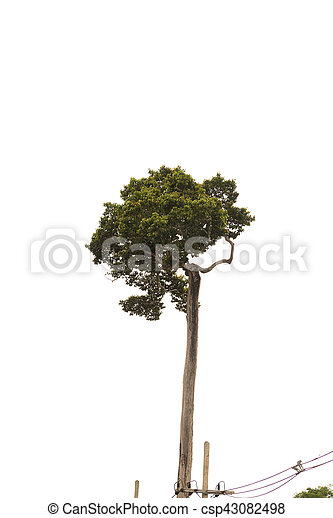 tree isolated on white background - csp43082498