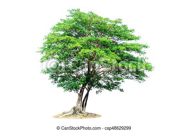 tree isolated on white background - csp48629299