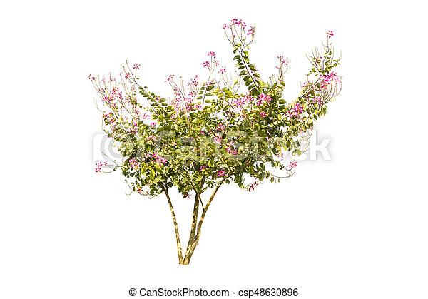 tree isolated on white background - csp48630896