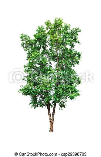 Tree isolated on white background - csp29398703