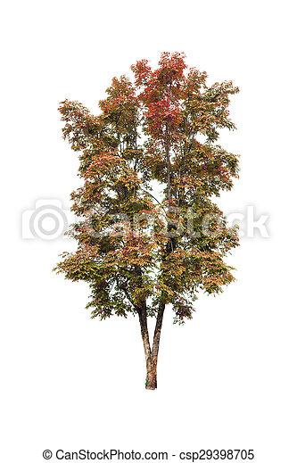 Tree isolated on white background - csp29398705