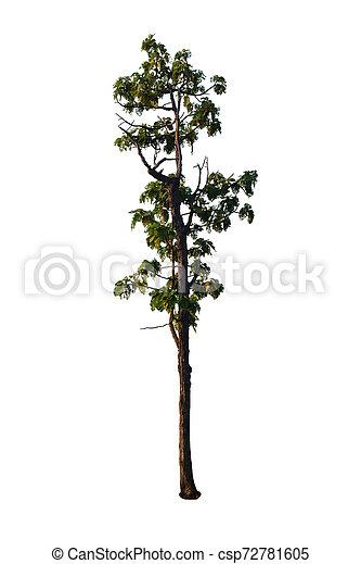 Tree isolated on white background - csp72781605