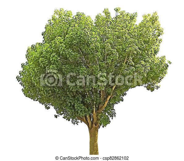 Tree isolated on white background - csp82862102