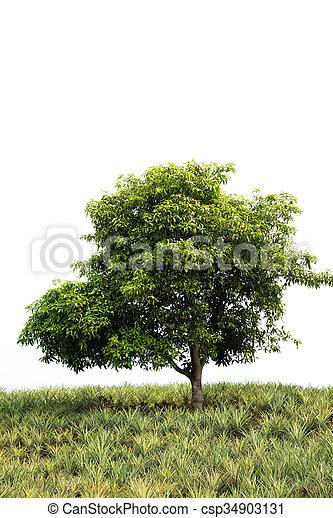 tree isolated on white background - csp34903131