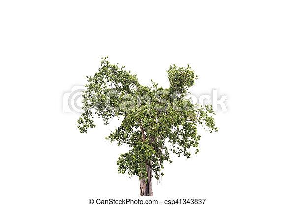 tree isolated on white background - csp41343837