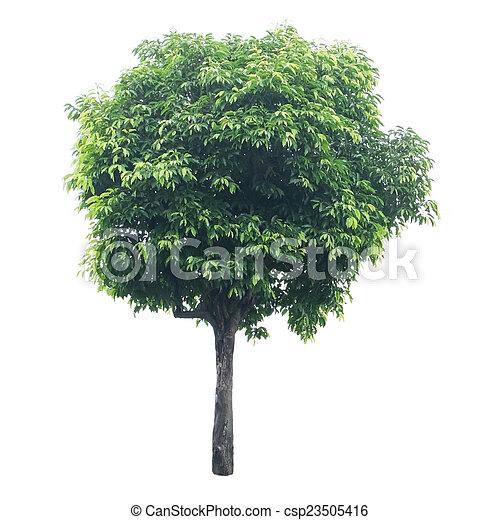 Tree isolated on white - csp23505416