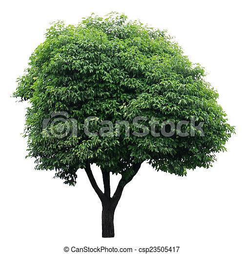 Tree isolated on white - csp23505417