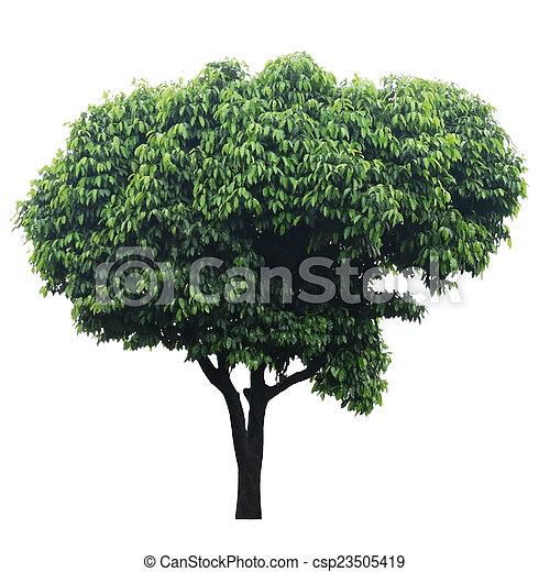 Tree isolated on white - csp23505419