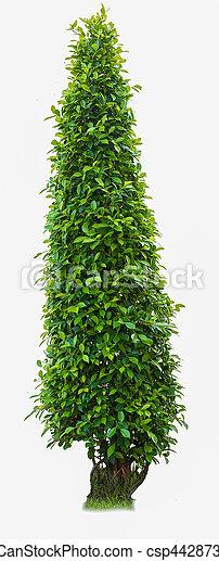 tree isolated on white - csp44287370