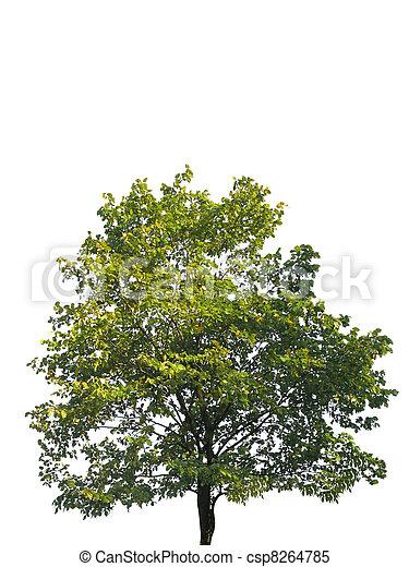 tree isolated on white - csp8264785