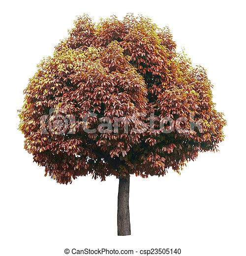 Tree isolated on white - csp23505140