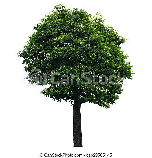 Tree isolated on white - csp23505145