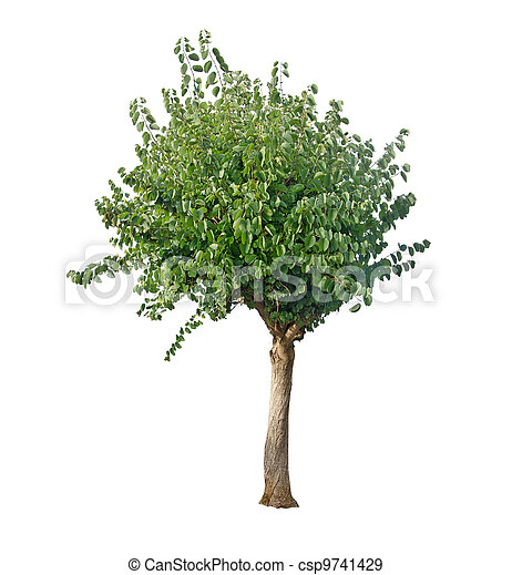 tree isolated on white - csp9741429