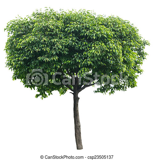 Tree isolated on white - csp23505137