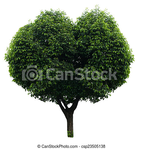 Tree isolated on white - csp23505138