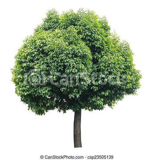 Tree isolated on white - csp23505139